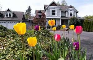 spring-tulips-house